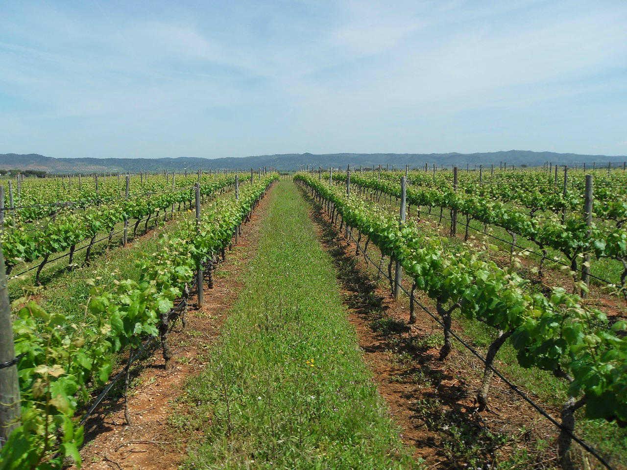 alentejo wijngaard