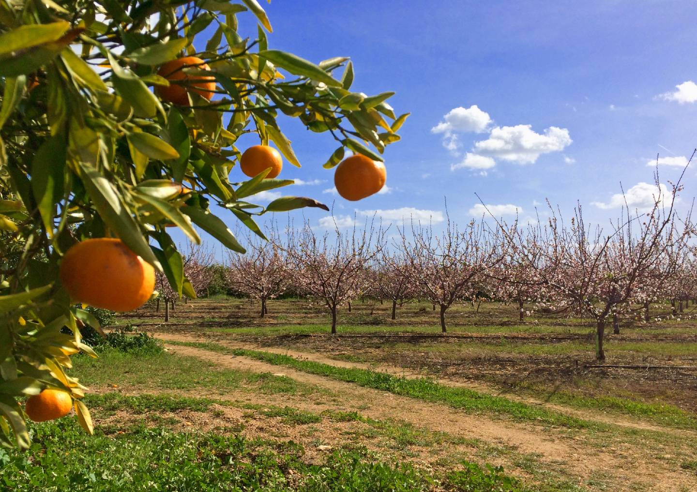 fruitboomgaard